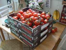 3 Cases of Organic Tomatoes Rescued From a San Francisco Dumpster and Transformed Into Canned Tomato Sauce
