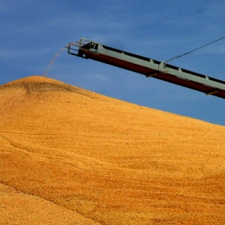 Ag Subsidies Linked To Obesity