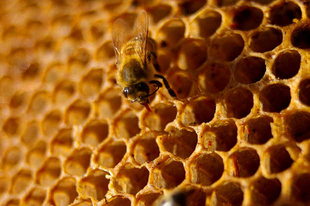 Space Laser Used to Detect Fake Foods Like Honey