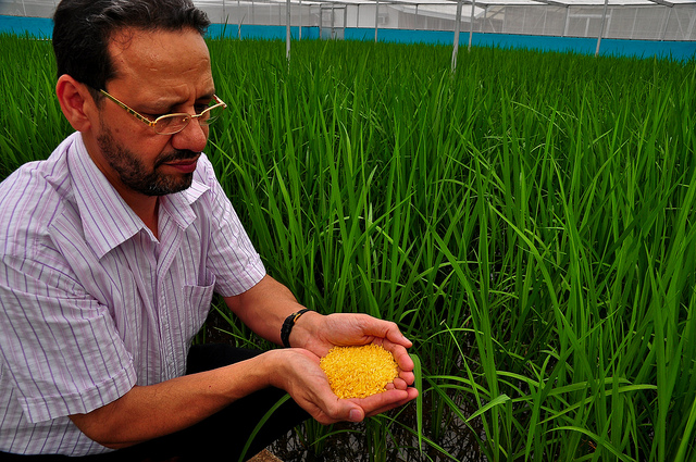 Golden Rice: A Panacea or Hoax?