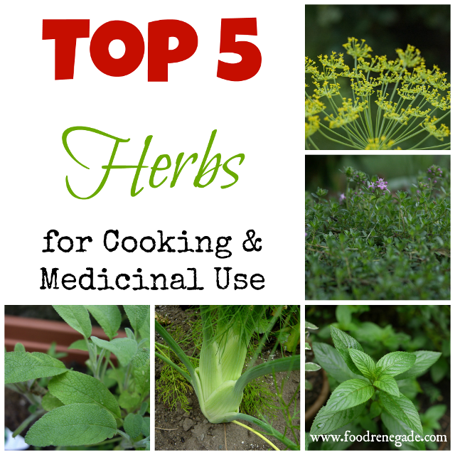 top 5 herbs to grow for cooking and medicinal uses