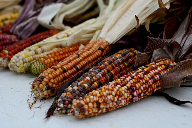 mexico-bans-gmo-corn