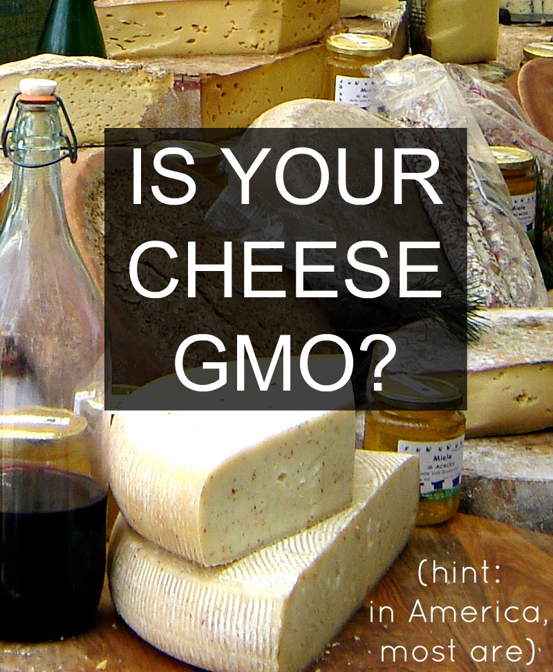 is-your-cheese-gmo-2