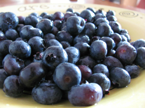 blueberries in season